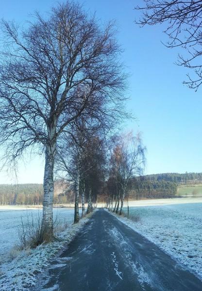 2013-01-12_094722_Seidfeld