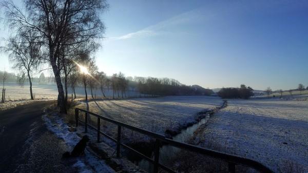 2013-01-12_095336_Seidfeld