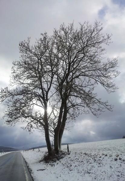20130202_130600_Richtung-Birkenbrauck