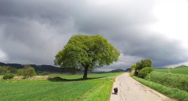 20130512_134222_Schulten-Eiche