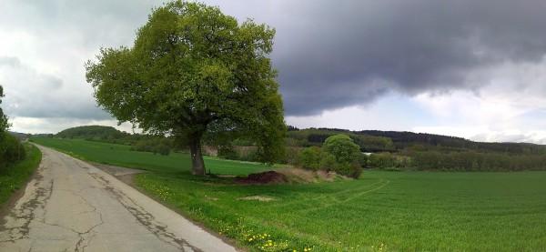 20130512_134356_Schulten-Eiche