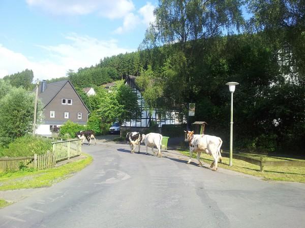 20140625_182721_Sallinghausen