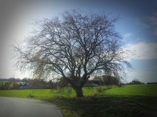 Büenfeld