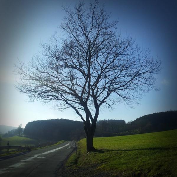 20141214_132846_Richtung-Altenhellefeld