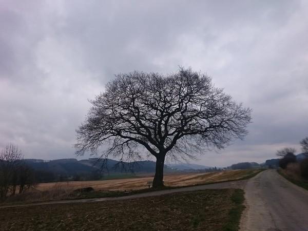 20150406_115152_Schulten-Eiche