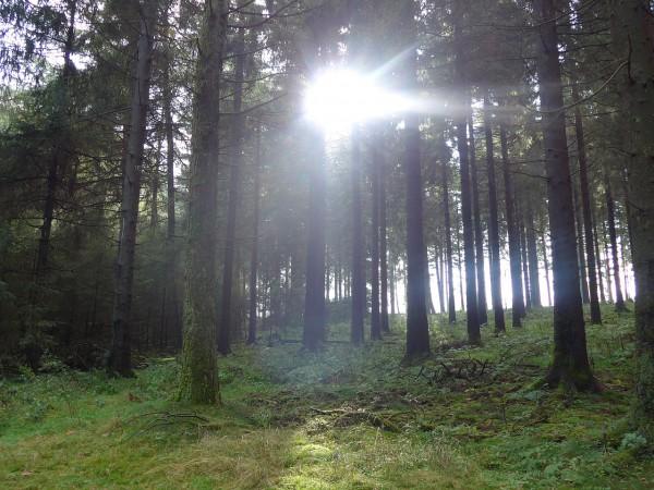 20151018_114800_Im-Wald