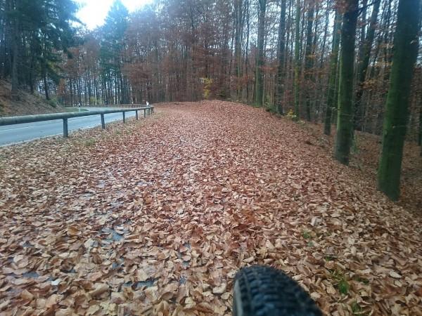 20151107_150516_Radweg-unter-Herbstlaub
