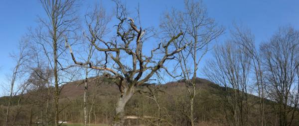 20160206-150552-Baum
