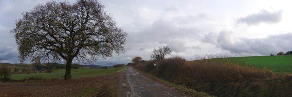 20161119-120435-schulten-eiche